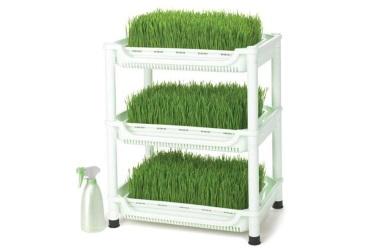 Проращиватель Tribest Wheatgrass Grower Set SM-350