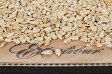 Подсушивание семян подсолнечника в дегидраторе