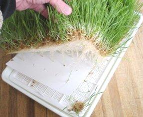 Пластиковый лоток Проращивателя Tribest Wheatgrass Grower Set SM-350