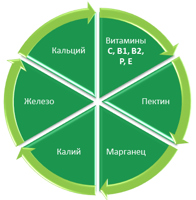 11_Sokovyzhimalka_dlia_yablok_1.png