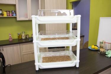 Проращивание роcтков в домашних условиях