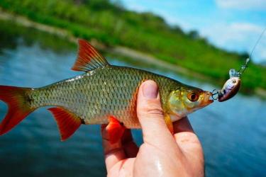 Сушка рыбы в электросушилке
