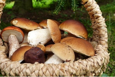 грибы летом
