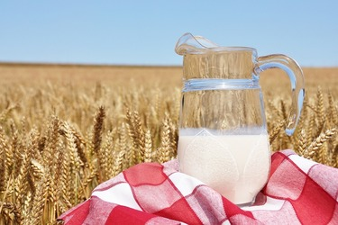 Молочко из пророщенной пшеницы