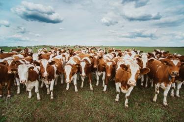 Убой животных на мясо