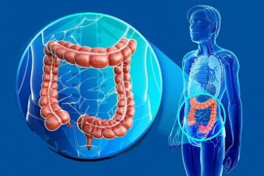 Очистить кишечник от шлаков и токсинов