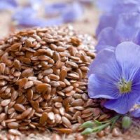 Семена льна как принимать
