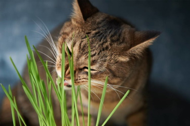 трава кошкам какая