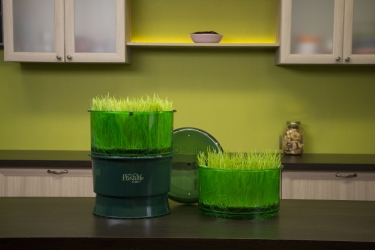 Проращивание витграсса в домашних условиях в проращивателе Tribest Freshlife FL-3000