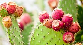 kaktus_for_stat.jpg