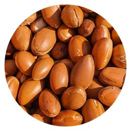Семена аргана