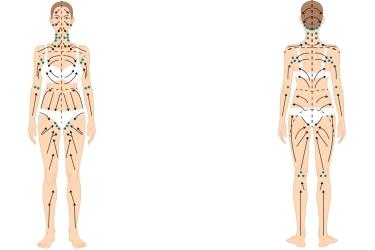 Движение лимфы в организме