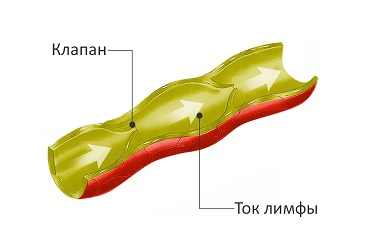 лимфоток